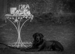 2018-09-30 Warten auf Madame Foto Bild hund, natur, tiere Bilder auf fotocommunity